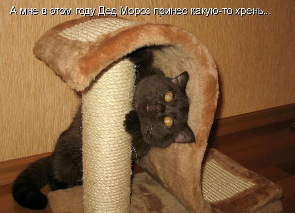 http://www.mnogosmexa.ru/images/img/cheerful-pictures-20.jpg