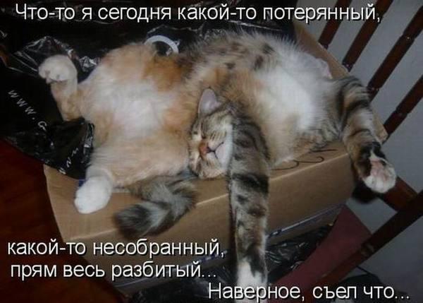 http://www.mnogosmexa.ru/images/img/cheerful-pictures-23.jpg