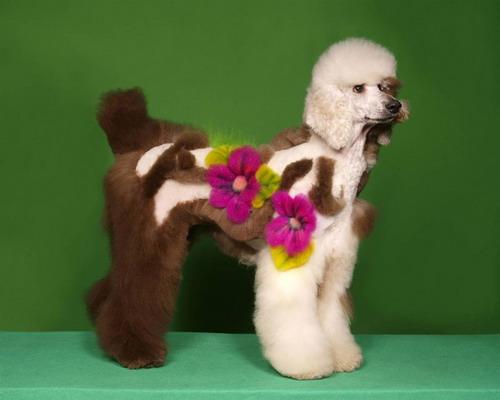 Прикольные причёски животных 15 фото