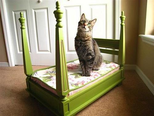 Для кошек своими руками кроватка фото