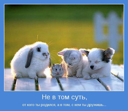 http://www.mnogosmexa.ru/images/img/motivatori-about-friendship-16.jpg