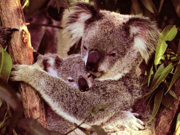 Родительская любовь животные