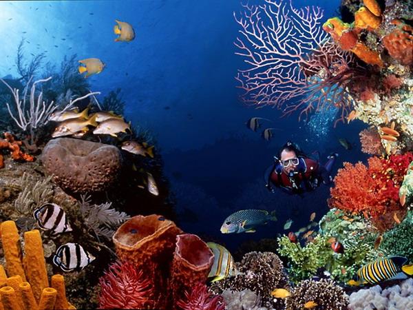 Подводный мир 20 фото природа